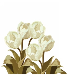 Vintage watercolor white tulips bouquet vector