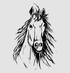 Horse scetch vector
