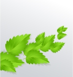 Mint Leaves vector image vector image