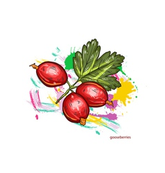 gooseberries with colorful splashes vector image