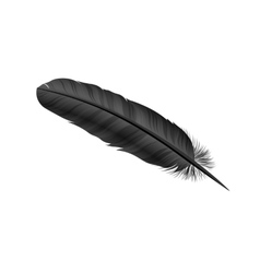 Black bird feather on white background vector image