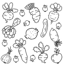 Doodle of vegetable object hand draw vector