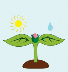 what plant needs vector image vector image