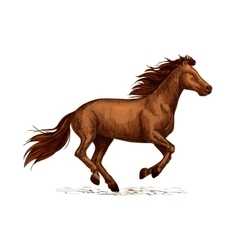 Horse races sign sport symbol of stallion racing vector