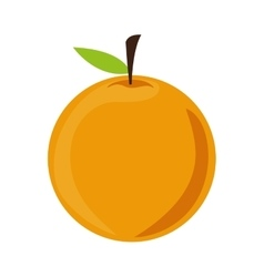 Orange fruit icon vector