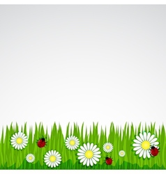 Spring background with grass chamomile vector