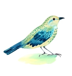 Watercolor of a bird on white vector image
