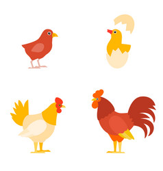 A colorful farm birds collection vector