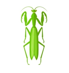 Green Grasshopper Icon vector image
