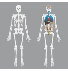 white human bones skeleton with human organs eps10 vector image