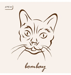 Bombay vector