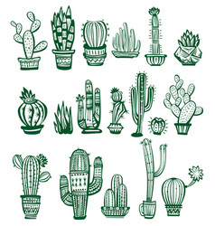 Set of cactuses vector