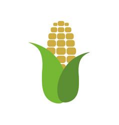 Corn farm fresh vector