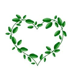 Fresh green leaves in a heart shape vector