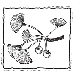 Ginkgo biloba hand-drawn branch with leaves vector image