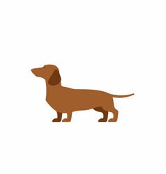 Dog dachshund vector