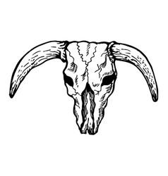 texas longhorn bull skull vector image
