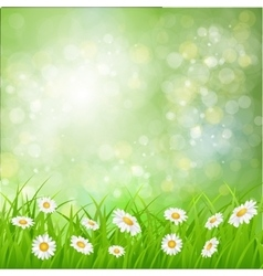 daisy background summer design vector image vector image