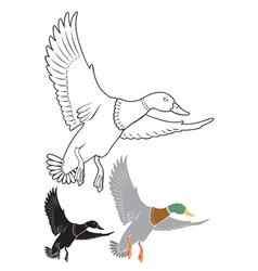 duck vector image