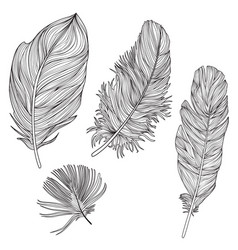 feather sign isolated set different birds doodle vector image