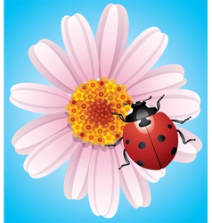 flower and ladybird vector image vector image