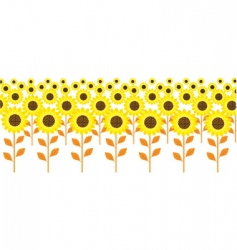 field sunflowers vector image