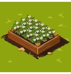 Vegetable garden box with potatoes set 12 vector