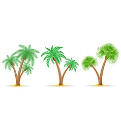 Palm tree 26 vector