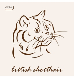 British shorthair vector