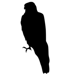 silhouette of goshawk vector image vector image