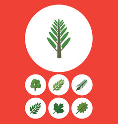 Flat icon ecology set of acacia leaf jungle vector