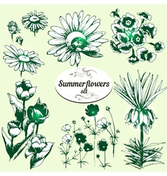summer flowers set vector image vector image