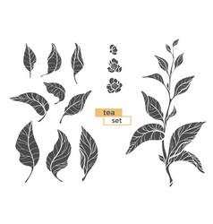 tea branch silhouette 2 vector image vector image