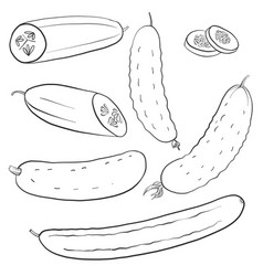 drawing cucumbers vector image vector image