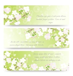 Spring banners with blossoming tree brunch vector image