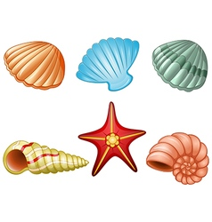 Sea shells and sea star vector