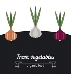 Onion and garlic vegetables vector