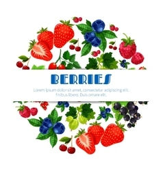 Fresh berries poster of berry bunch vector image vector image