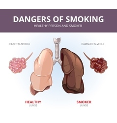 Lungs and alveoli of a healthy person smoker vector