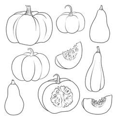 drawing pumpkins vector image