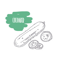 Hand drawn cucumber isolated on white vector