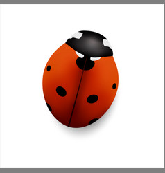 Insect seven points ladybug isolated on white vector