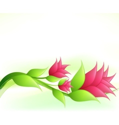 Elegance with pink flowers vector image