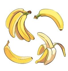 Bananas set in cartoon style vector image vector image