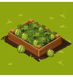 Vegetable Garden Box with Watermelons Set 7 vector image vector image