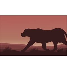 Silhouette of lion alone scenery vector