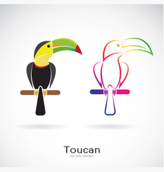 toucan bird design on white background wild vector image vector image