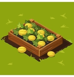 Vegetable Garden Box with Melons Set 6 vector image vector image