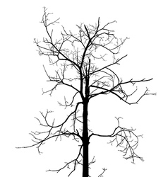dry tree vector image vector image