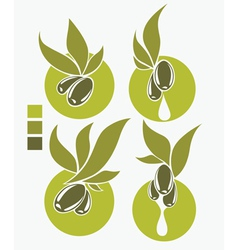 Collection of fresh and health olive oil symbols vector